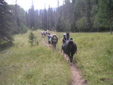 Llama Trekking Day Hikes in Taos and Santa Fe